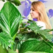 plants.pervaya.com.ua